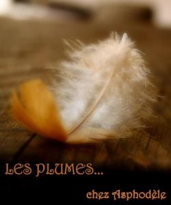 plumes d'Asphodèle